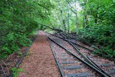 Was blüht denn da im Gleisbett? Ein botanischer Spaziergang im Natur-Park Südgelände.
