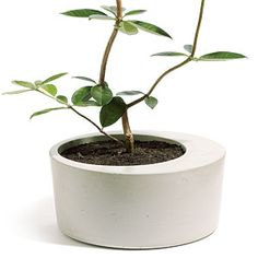Concrete planter - 21 feel-good holiday gifts - Sunset Mobile