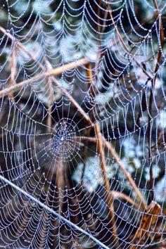 Love pictures of spiderwebs
