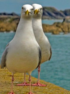 jito57: kendrasmiles4u: TOOGLE (2 Gulls) by Bob.Bee on Flickr.