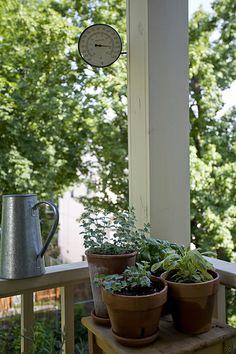 I love it -  Herbs / http://www.everydaygardening.net/herbs-25/