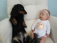 @hdiamondfarms 23 Dogs Who Are Already Best Friends With The Baby
