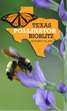 Search for bugs and butterflies during the Texas Pollinator BioBlitz  #Texas #TexasToDo #Pollinators