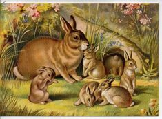 vintage rabbit - Google Search