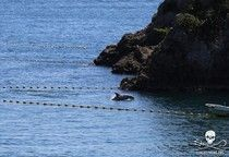 Dolphin Hunt In Taiji Japan Rages On With Another Round Of Killing - this makes me cry.
