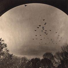 SHIKAMA Takeshi(志鎌 猛) Urban Forest - Central Park #42 platinum palladium print