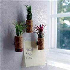 Get Wine Cork Planters with Air Plants - Set of three with magnets at $12.95.Visit http://www.airplantshop.com/Wine_Cork_Planters_with_Air_Plants_p/wine-cork-3.htm