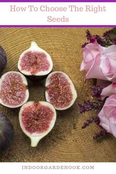While it's very tasty, it also can be a bit tricky to grow, so we've prepared a short guide for you to learn how to grow a fig tree from the fruit indoors. Garden Nook, Garden S, Container Gardening, Gardening Tips, Indoor Gardening, Vegetable Gardening, Vegetable Garden For Beginners, Room With Plants, Fruit Seeds