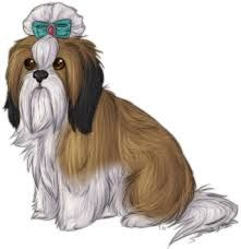 real pencil drawing of shih tzu - Google Search