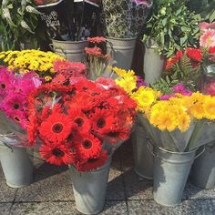 Last gorgeous photo of our day out today just had to share these stunning #colours #flowers #sunshine