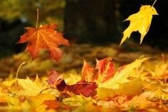 Top Fall 2015 Color Trends to Try in Your Home Now Monthly Horoscope, Daily Horoscope, Mabon, Autumn Day, Autumn Leaves, Happy Autumn, Fall Days, Autumn Harvest, Harvest Moon