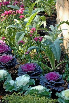 Edible Landscape -