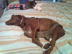 Gatos y perros....
