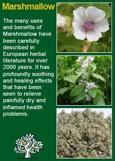 The root of Marshmallow is demulcent and diuretic, and will be found valuable in diseases of the mucous tissues, as hoarseness, catarrh, pneumonia, ...