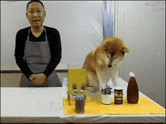 Cooking with Doge