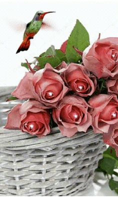 Beautiful Flowers Pictures, Beautiful Gif, Flower Pictures, Beautiful Birds, Good Morning Flowers Rose, Rosas Gif, Romantic Gif, Flowers Gif, Cool Animations