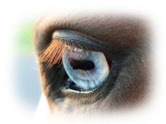 Ever Wonder How Your Horse Sees? This Will Tell You