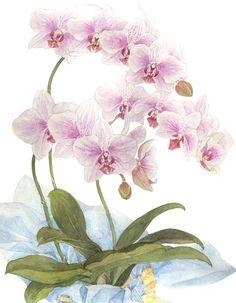 秋色波连波的相册-花的绘日记