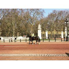#buckinghampalace #mountedpolice #changingtheguard #london #tb by echtevanda