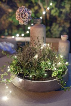 Lights in the garden Porch Garden, Indoor Garden, Outdoor Planters, Outdoor Gardens, Small Outdoor Spaces, Nature Plants, Christmas And New Year, Gardening Tips, Fall Decor