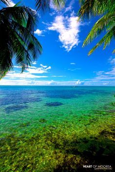 Moorea, beginning the honeymoon countdown! Places Around The World, The Places Youll Go, Cool Places To Visit, Places To Travel, Around The Worlds, Travel Destinations, Bora Bora, Tahiti Resorts, Wild Photography