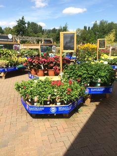 Garden & Leisure Company - Huntingdon - Garden Centre - Lifestyle - Home - Garden - Farm Shop - WHSmith - Layout - Landscape - Customer Journey - Visual Merchandising - www.clearretailgroup.eu