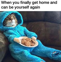 Funny animal memes of the days. Check these top 22 good afternoon funny animal memes dump of the day that will make you laugh. Funny Shit, Funny Cute, The Funny, Funny Jokes, Hilarious, Funny Captions, Funniest Memes, Funny Stuff, Funny Animal Pictures
