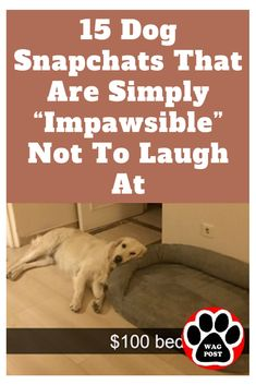 You're sure to laugh at these whether you're a dog lover or not. Dog Snapchats, Horse Dance, 15 Dogs, Funny Dog Pictures, Dog Training Tips, Laughing So Hard, Dog Life, Rescue Dogs, Funny Dogs