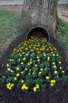 Southern Patio whiskey barrel, some shade and a ton of gorgeous flowers can create a whimsical looking spilled garden.A Southern Patio whiskey barrel, some shade and a ton of gorgeous flowers can create a whimsical looking spilled garden. Garden Yard Ideas, Diy Garden, Garden Care, Garden Planters, Garden Projects, Garden Decorations, Balcony Garden, Backyard Ideas, Recycled Garden