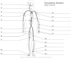 Anatomy and Physiology Labeling Worksheets | Posted by Janell at 12:22 PM 0 comments Links to this post . I hope ...