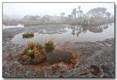 Mount Roraima Landscape, Venezuela