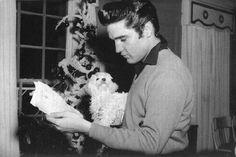It looks like Elvis is holding a BICHON FRISE Puppy