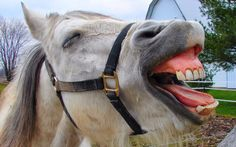 Pictures beautiful horses reactions collection