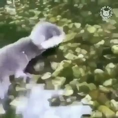 Cute babys first swim Funny animals # babies Cute Funny Animals, Cute Baby Animals, Animals And Pets, Cute Dogs, Cute Babies, Animal Pictures, Cute Pictures, Baby Otters, Cute Animal Videos