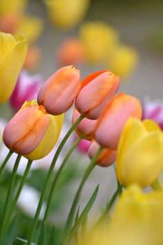 One Million Tulips Tulips Flowers, Colorful Flowers, Spring Flowers, Beautiful Flowers, Flowers For Girlfriend, Red Orchids, Good Morning Flowers, Garden Landscape Design, Farm Gardens