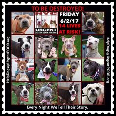 TO BE DESTROYED 06/02/17 - - Info   To rescue a Death Row Dog, Please read this:http://information.urgentpodr.org/adoption-info-and-list-of-rescues/  To view the full album, please click here:http://nycdogs.urgentpodr.org/tbd-dogs-page/ -  Click for info & Current Status: http://nycdogs.urgentpodr.org/to-be-destroyed-4915/