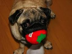 Can Dogs Eat Blueberries: A Dog Owners Guide to Berries ...
