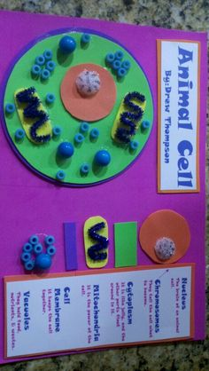 "animal cell project that doesn't cause me to gain weight (ahem, cake ""cells"")"