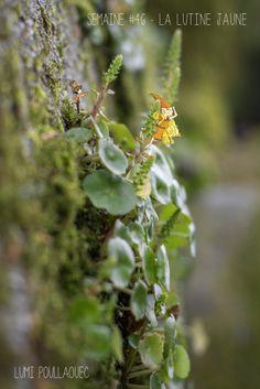 © Lumi Poullaouec - www.lumi.me La lutine jaune  #illustration #photographie #photography #fairy #fée #flower #nature #idea #photoshop #lutin #jaune #lutine