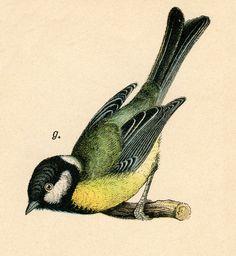 Vintage Clip Art - Pretty Bird on Branch - The Graphics Fairy
