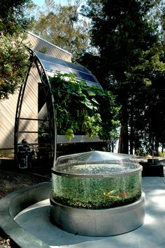 solar-powered, hydroponic and aquaponic edible wall garden. Goldfish sushi is an added bonus!