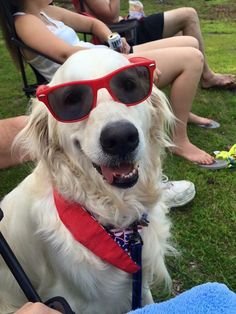 Like my shades, Dude?
