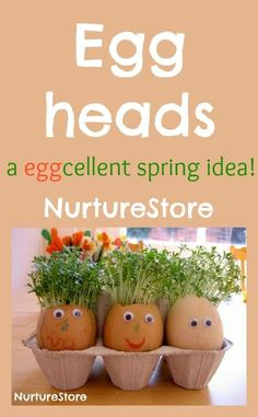 Eggheads with cress hair - fun spring activity for kids! Nice Easter egg activity - get kids gardening!