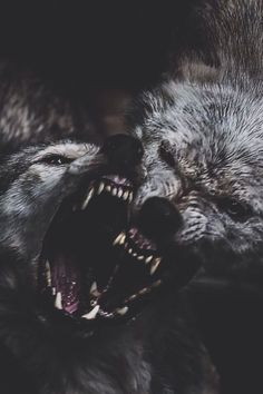 """Humans fear the beast within the wolf because we do not understand the beast within ourselves. Beautiful Creatures, Animals Beautiful, Regard Animal, Animals And Pets, Cute Animals, Wild Animals, Angry Wolf, She Wolf, Beautiful Wolves"