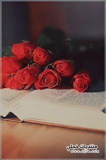 خلفيات ايفون ناعمه Cute Wallpaper Iphone Flowers Rose Iphone Wallpaper