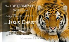 My Life, His Glory: I Am Determined!