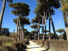 The route near Viterbo, Lazio, Italy