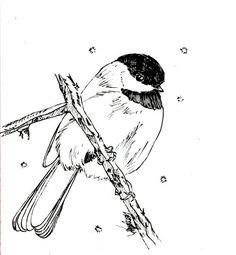 Burgess Bird Book Videos Playlist