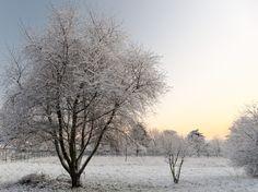 le jour se lève sur le parc recouvert de neige,