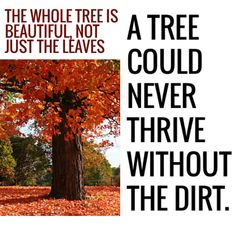 #RedCarpetLife - The trunk, the branches, the roots, the soil and the leaves – the whole tree is necessary – they are all connected parts that make the whole thing beautiful | http://wp.me/p3WUFM-69